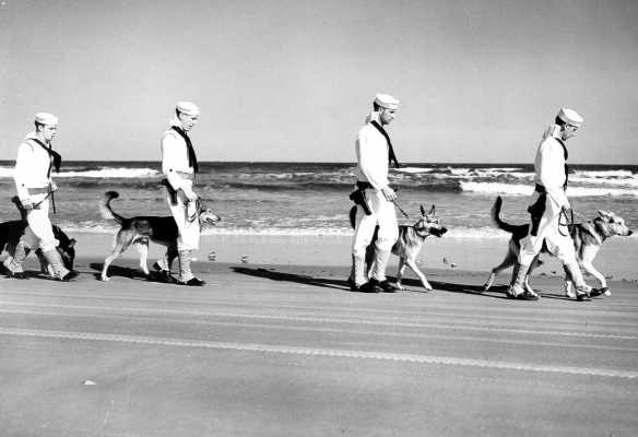 US Coast Guard Dog Patrol: Armed Coast Guardsmen, ready for action, start out on their vigilant patrols of America's coastline with their keen and loyal canine partners.  On anti-saboteur patrol, dogs are playing a responsible part in guarding our shores from attempts of enemy spies and saboteurs to land on American beaches