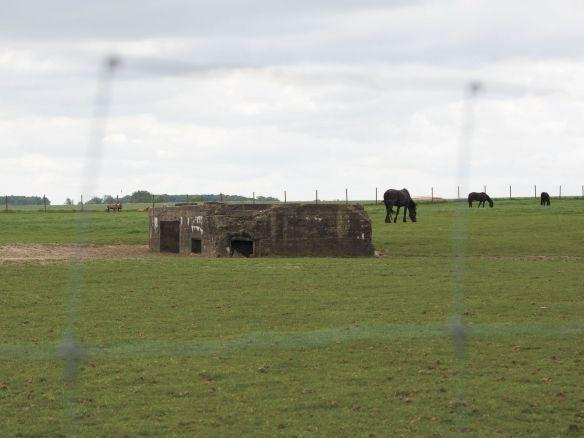 Horses eat in a pasture surrounding a World War I German-built bunker in St. Jan, Belgium.