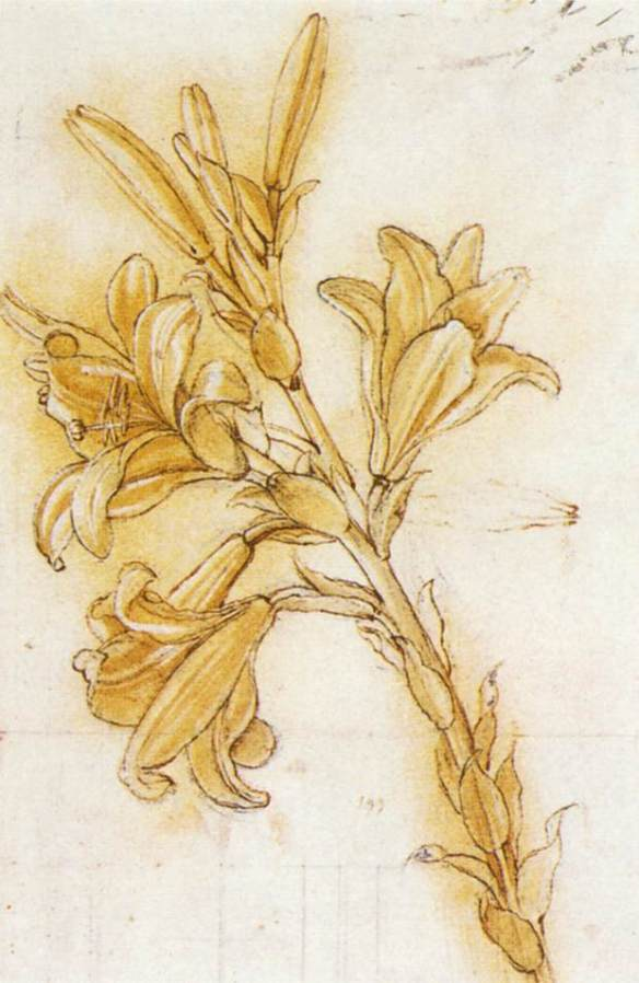 Lily (detail) 1480-85 Pe and ink, black chalk on paper, 314 x 177 mm Royal Library, Windsor. The outline of the lily is perforated for transferring the drawing to a wood panel.