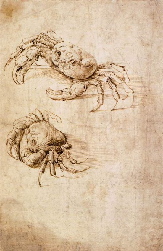 Studies of crabs - Drawing Wallraf-Richartz-Museum, Cologne.